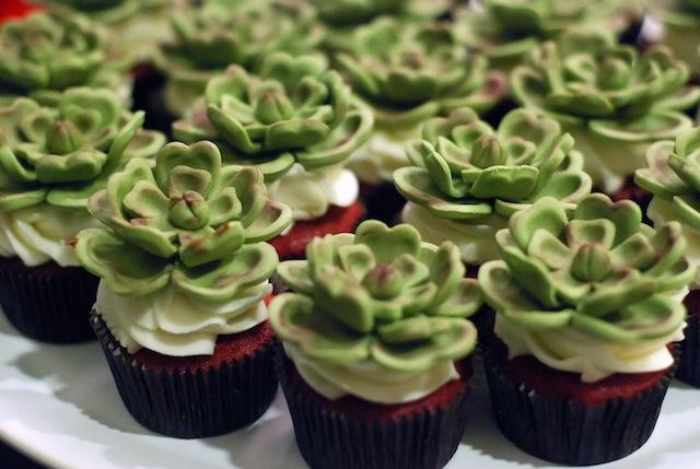 suculentas-cupcake