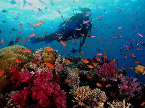 ScubaDiveAsia-Fiji_coral-diver