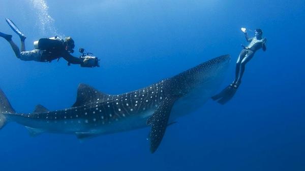 Tubarao Baleia Mergulho Maldivas